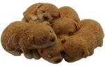 Puppy Cuddle