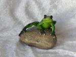 Golden Pond Frog on Rock A