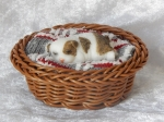 Dog in Basket Small A