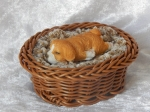 Dog in Basket Small B