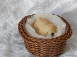 Dog in Basket Small D