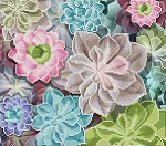 Diamond Dotz Diamond Art - Succulents